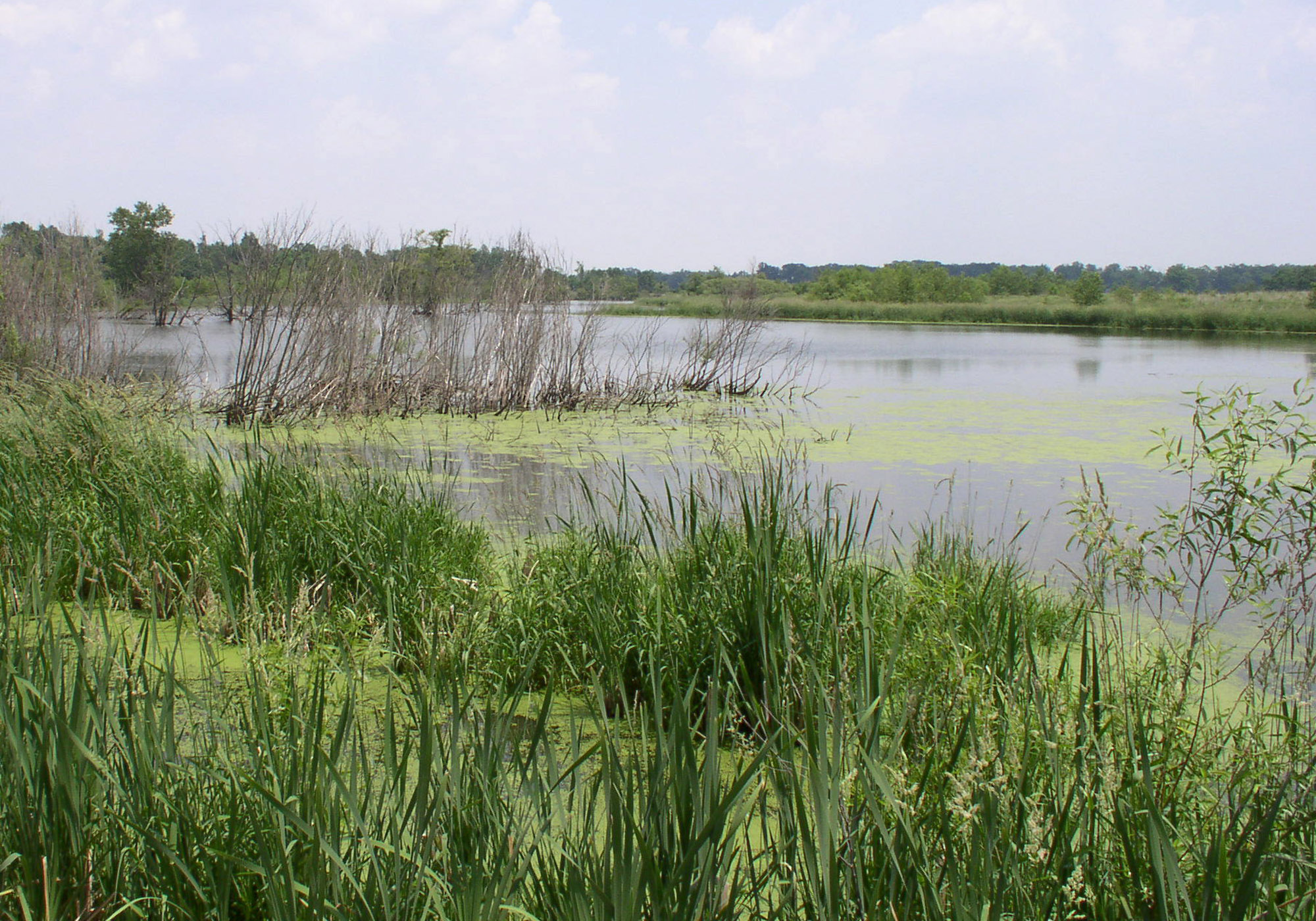 Shelby Wetlands